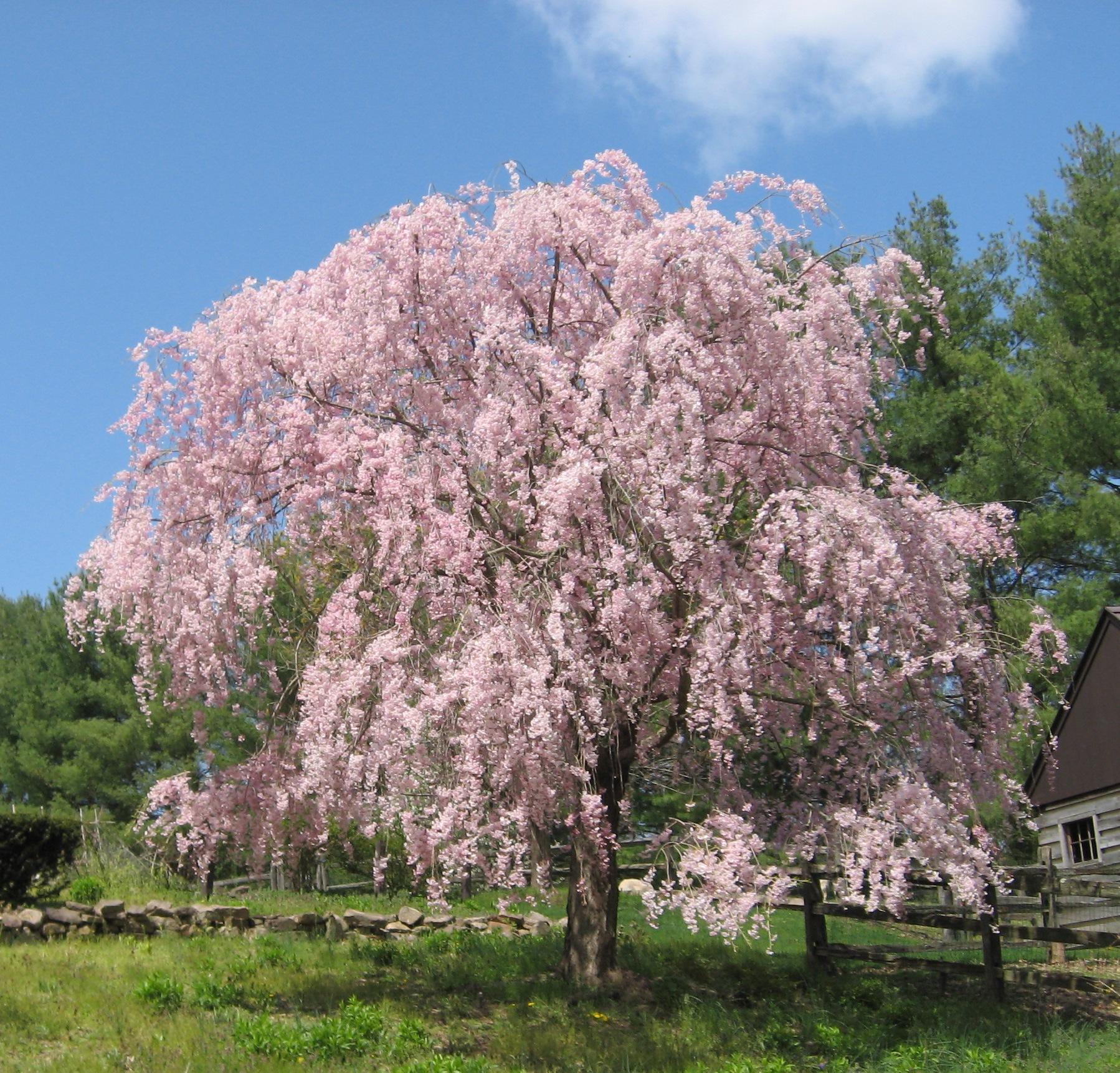 garden design flowering trees vines