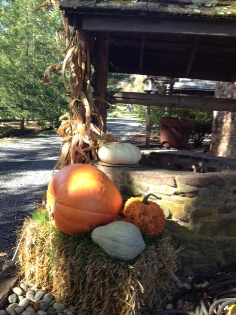 close up pumpkins